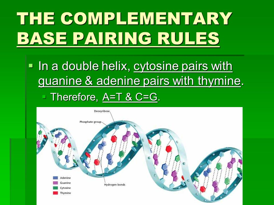 THE COMPLEMENTARY BASE PAIRING RULES