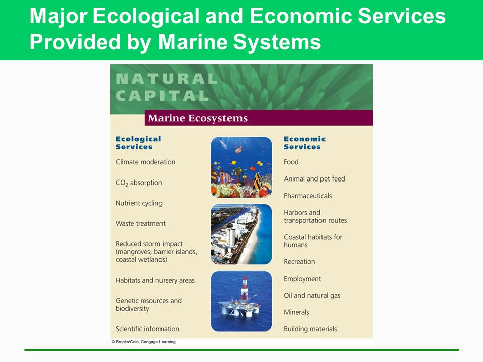 Major Ecological and Economic Services Provided by Marine Systems