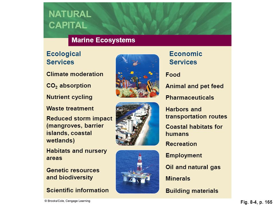 NATURAL CAPITAL Marine Ecosystems Ecological Services