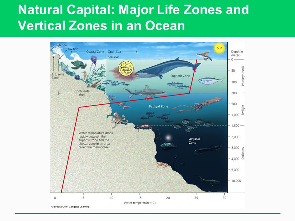 Natural Capital: Major Life Zones and Vertical Zones in an Ocean