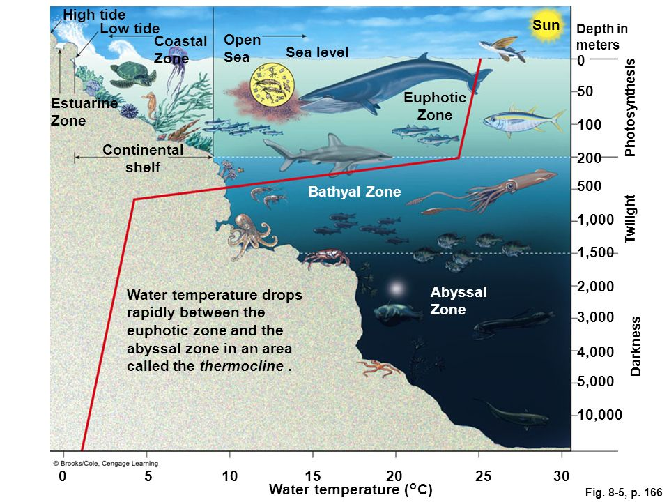 Euphotic Zone Continental shelf