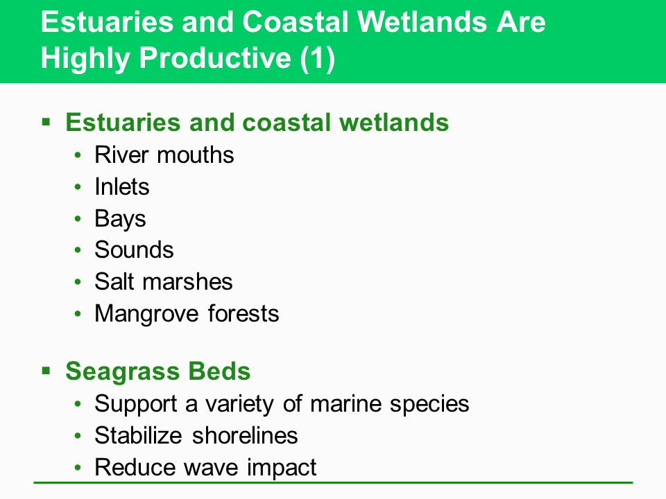 Estuaries and Coastal Wetlands Are Highly Productive (1)