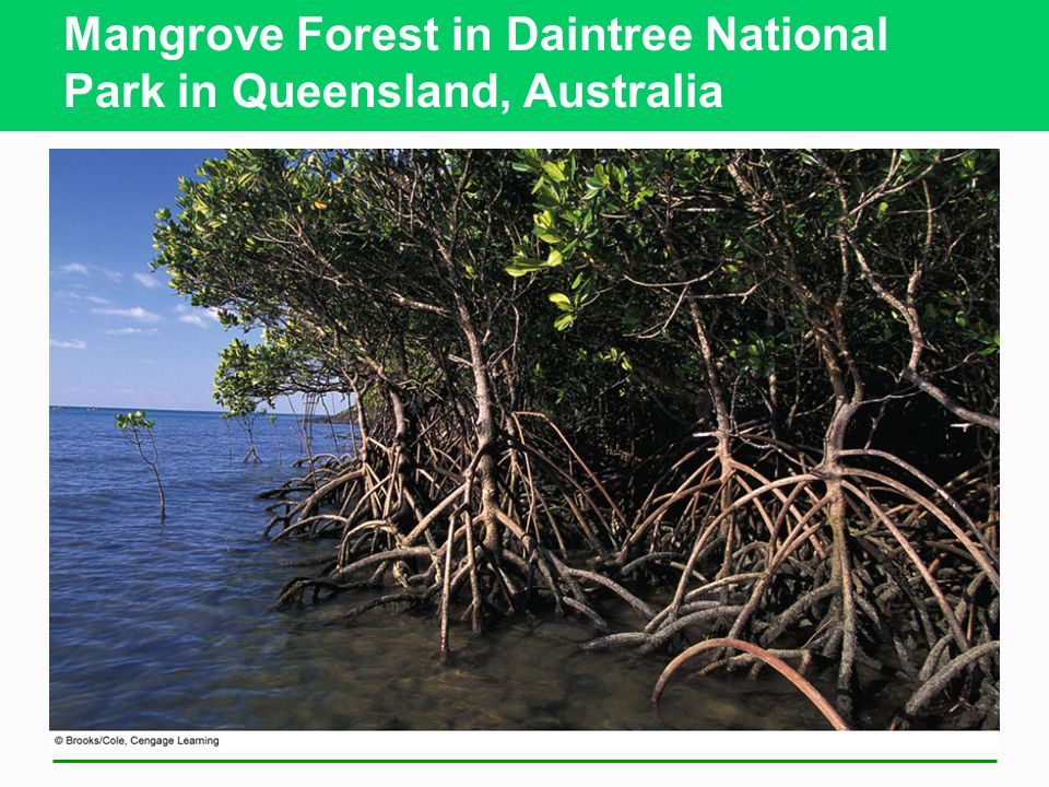 Mangrove Forest in Daintree National Park in Queensland, Australia
