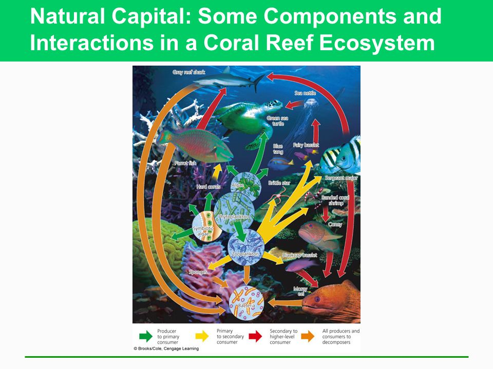 Natural Capital: Some Components and Interactions in a Coral Reef Ecosystem