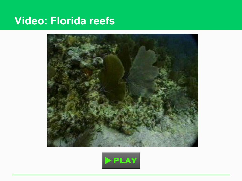 Video: Florida reefs