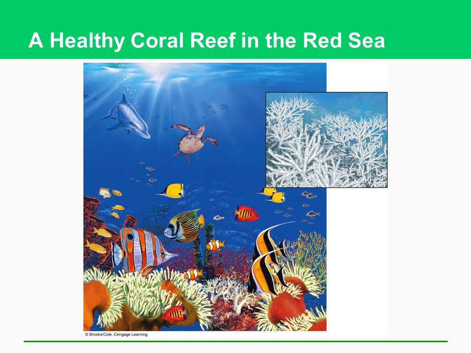 A Healthy Coral Reef in the Red Sea