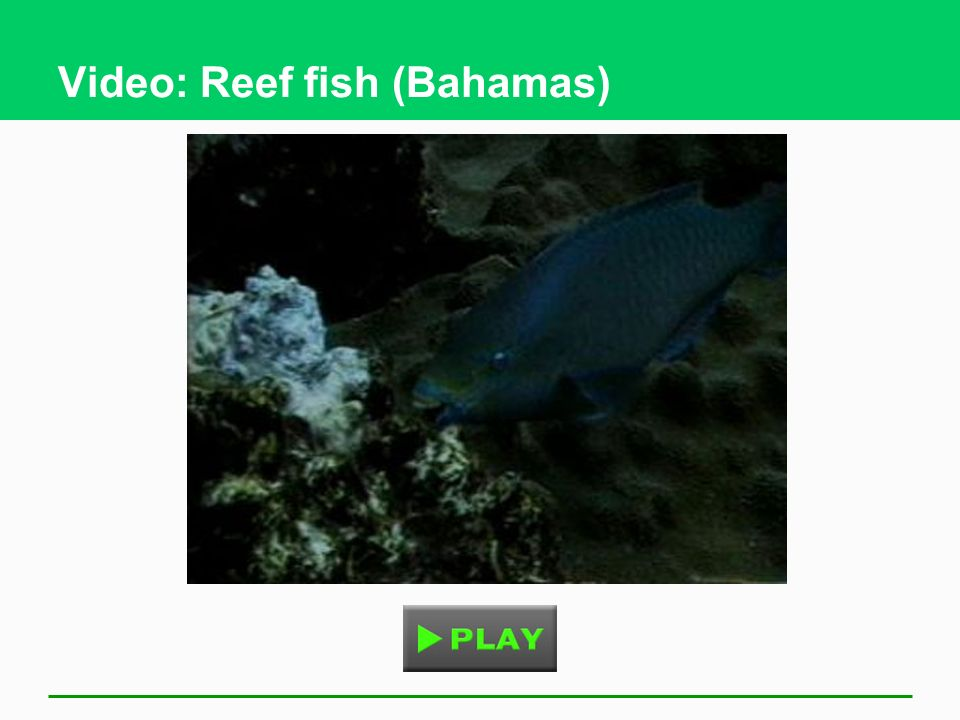 Video: Reef fish (Bahamas)