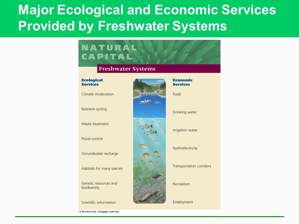 Major Ecological and Economic Services Provided by Freshwater Systems