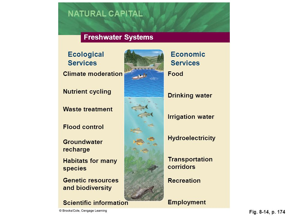 NATURAL CAPITAL Freshwater Systems Ecological Services