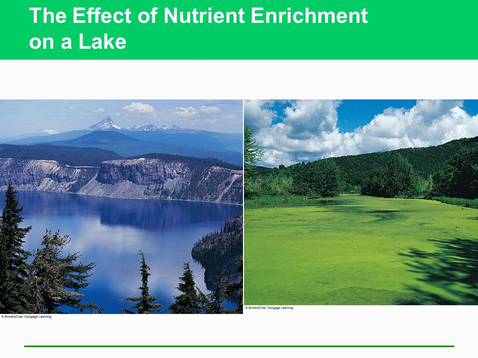The Effect of Nutrient Enrichment on a Lake