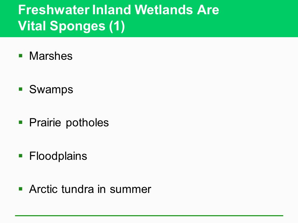 Freshwater Inland Wetlands Are Vital Sponges (1)