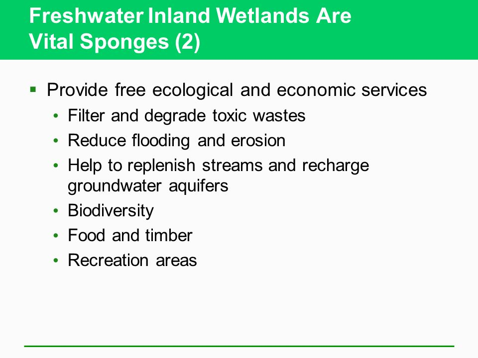 Freshwater Inland Wetlands Are Vital Sponges (2)