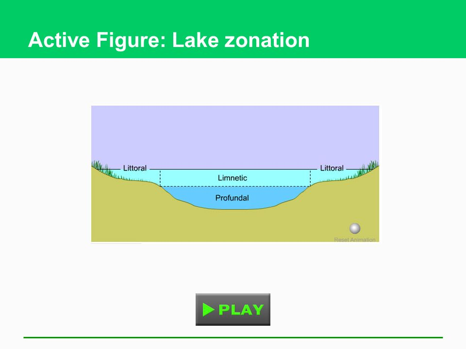 Active Figure: Lake zonation
