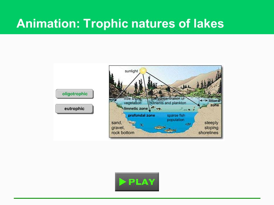 Animation: Trophic natures of lakes