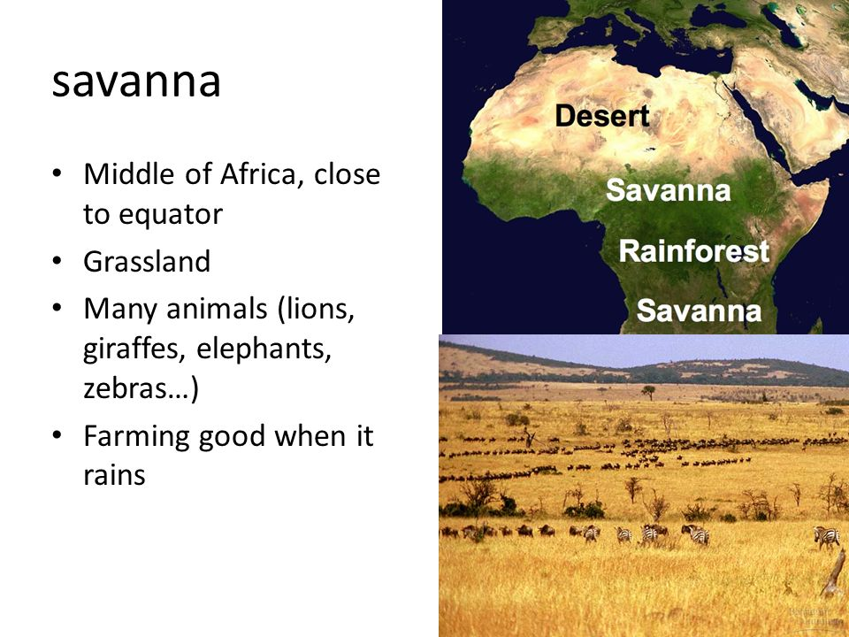 savanna Middle of Africa, close to equator Grassland