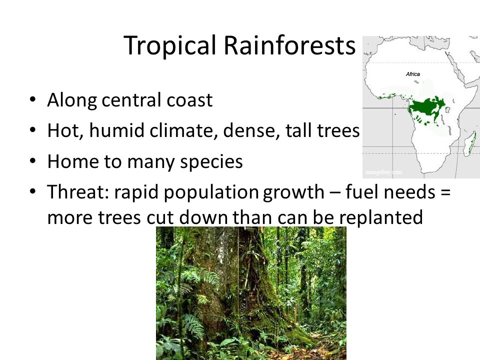 Tropical Rainforests Along central coast
