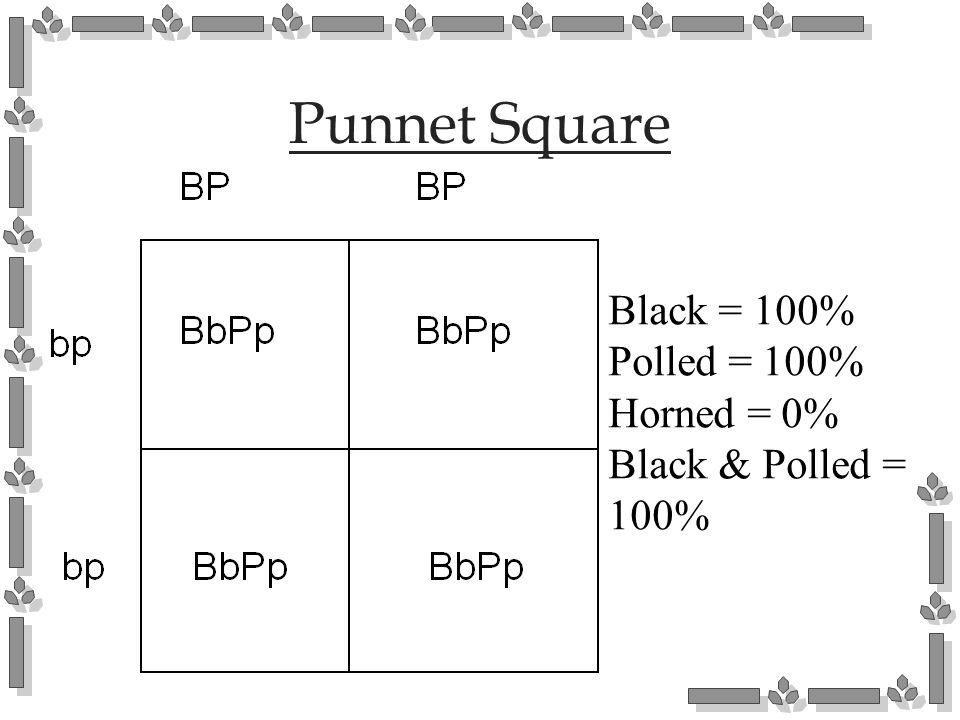 Punnet Square Black = 100% Polled = 100% Horned = 0%