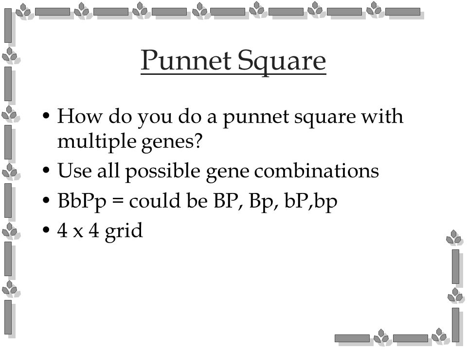 Punnet Square How do you do a punnet square with multiple genes