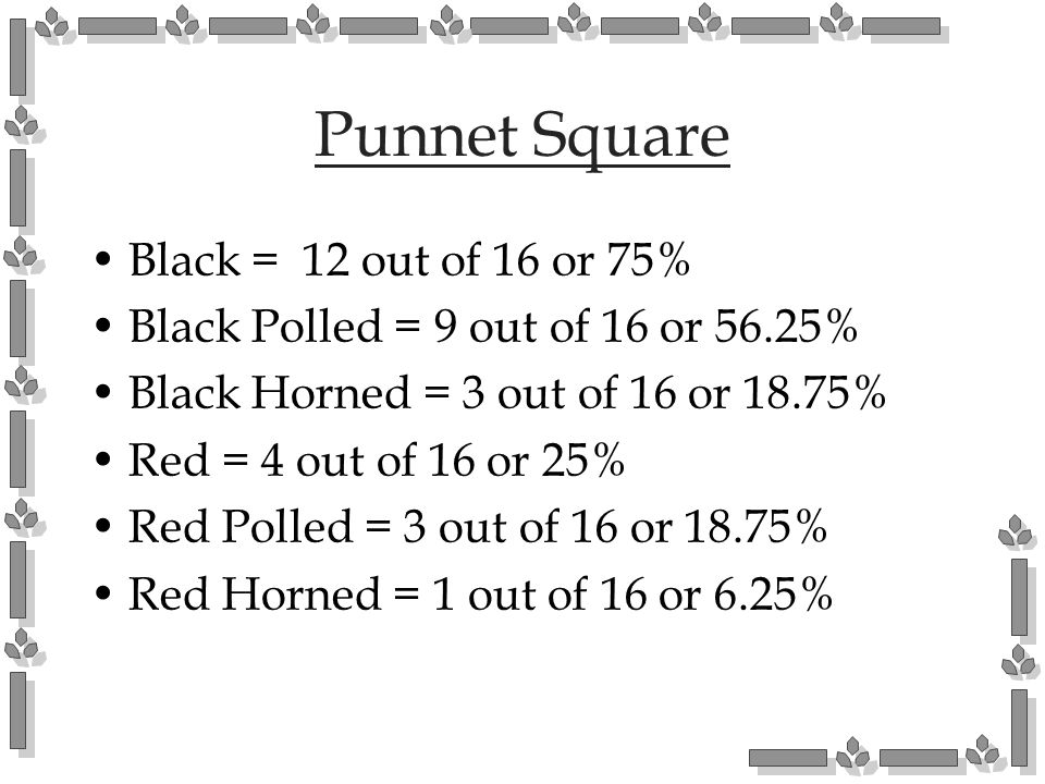 Punnet Square Black = 12 out of 16 or 75%