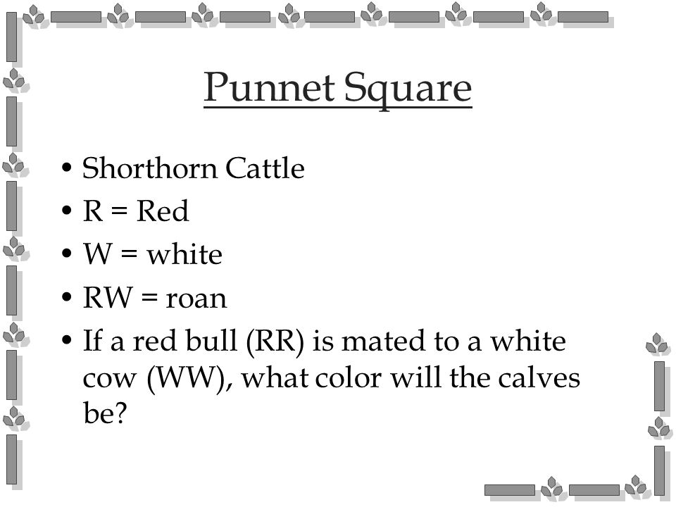 Punnet Square Shorthorn Cattle R = Red W = white RW = roan