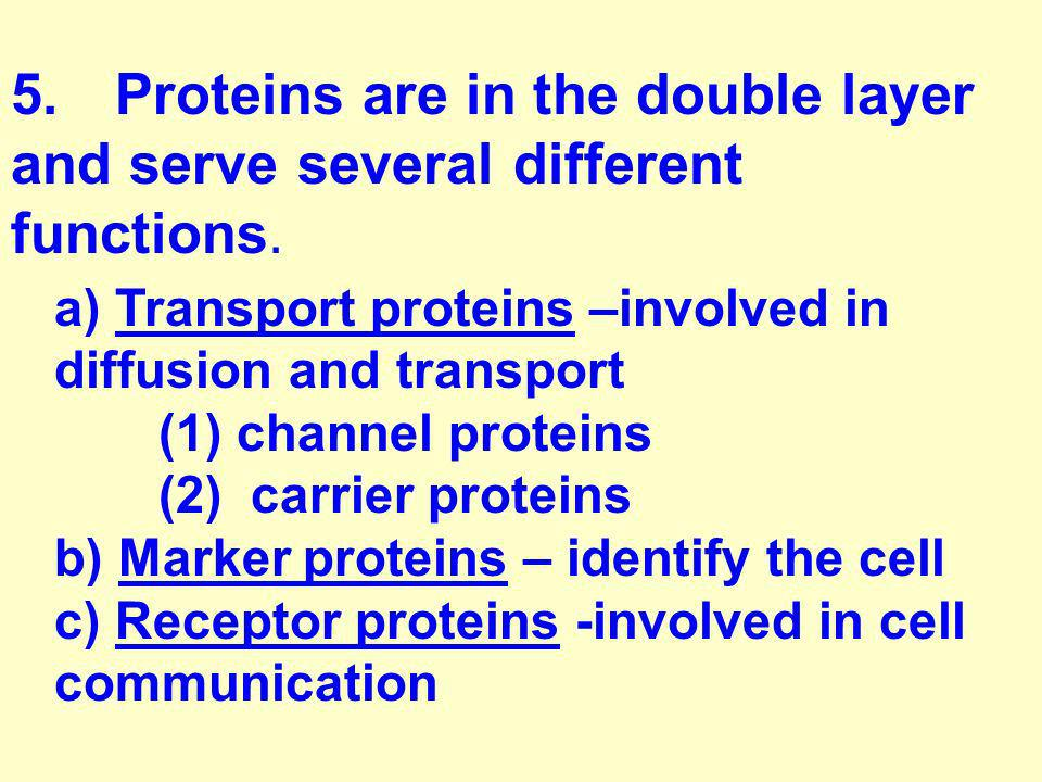 5. Proteins are in the double layer and serve several different functions.