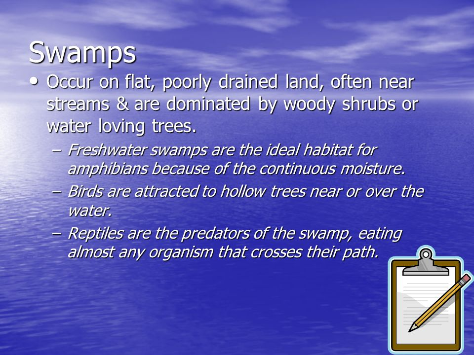 Swamps Occur on flat, poorly drained land, often near streams & are dominated by woody shrubs or water loving trees.