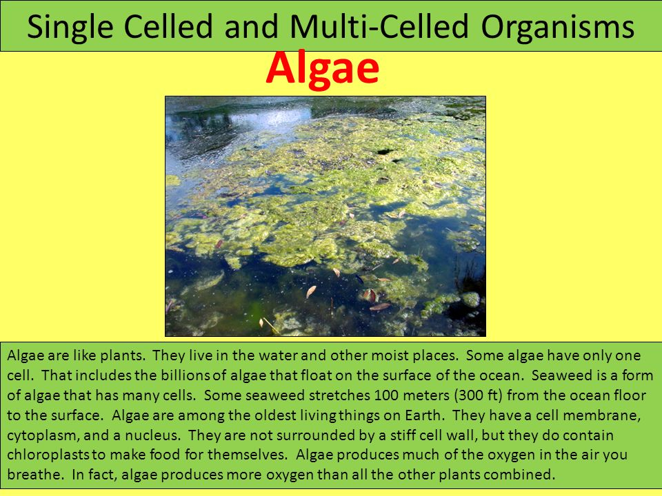 Single Celled and Multi-Celled Organisms