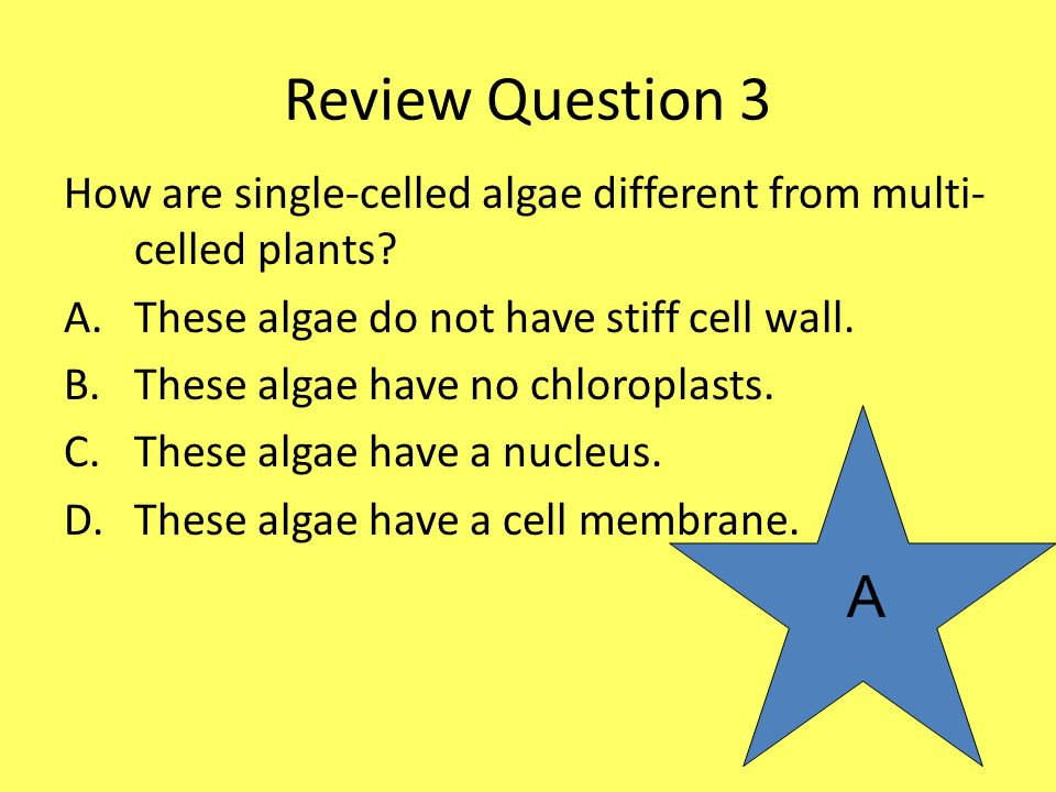 Review Question 3 How are single-celled algae different from multi-celled plants These algae do not have stiff cell wall.