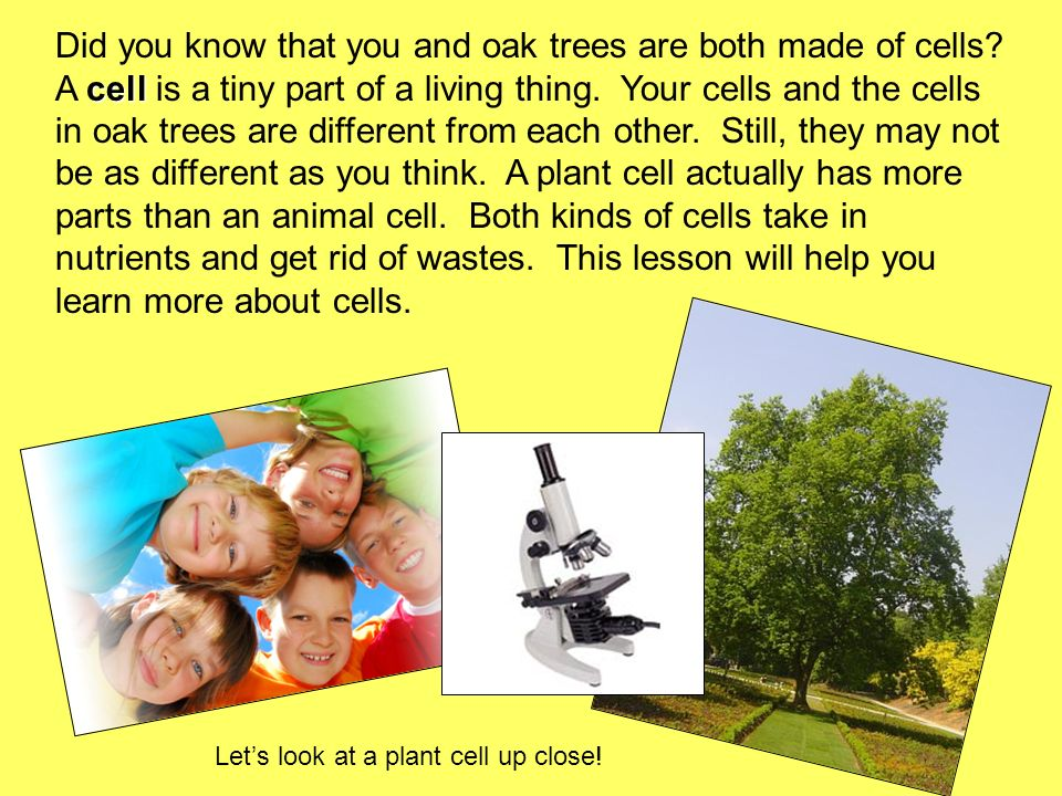 Did you know that you and oak trees are both made of cells