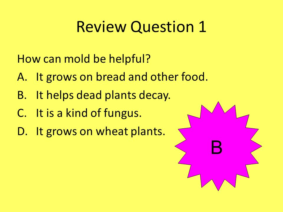 B Review Question 1 How can mold be helpful
