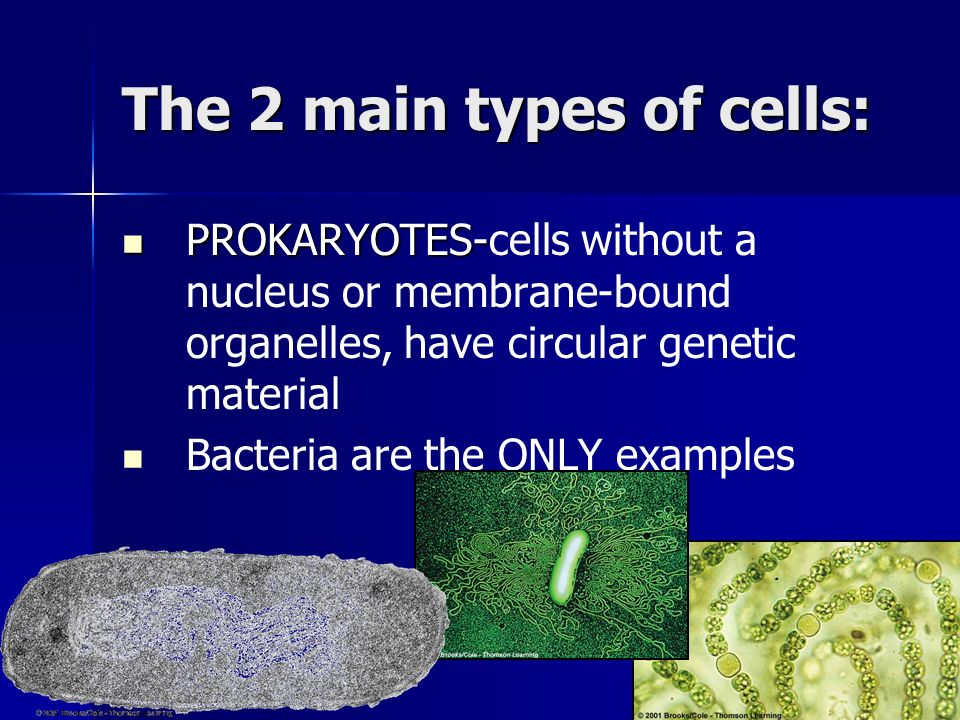 The 2 main types of cells: