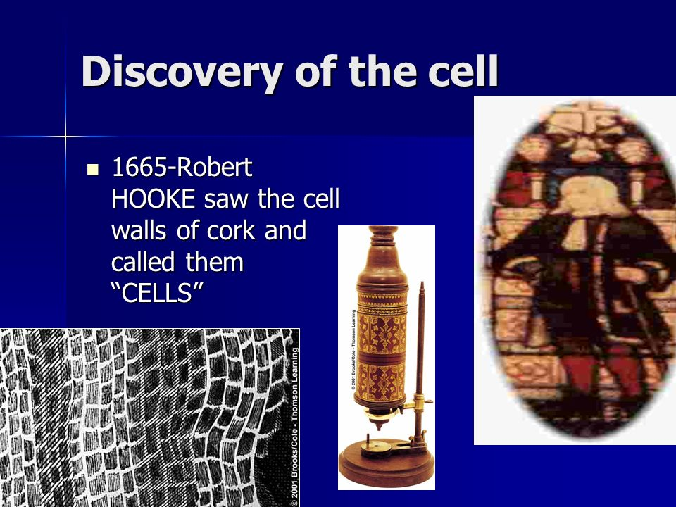 Discovery of the cell 1665-Robert HOOKE saw the cell walls of cork and called them CELLS