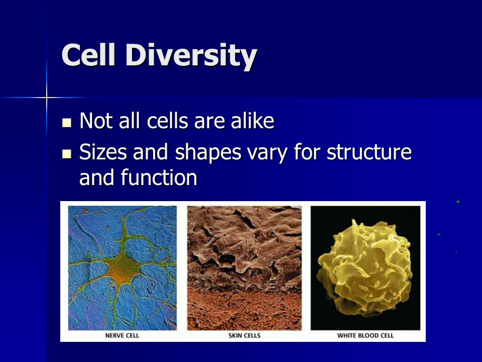 Cell Diversity Not all cells are alike
