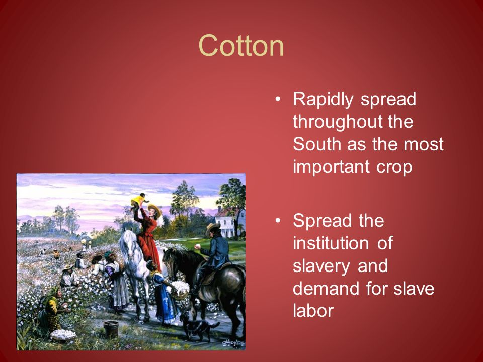 Cotton Rapidly spread throughout the South as the most important crop