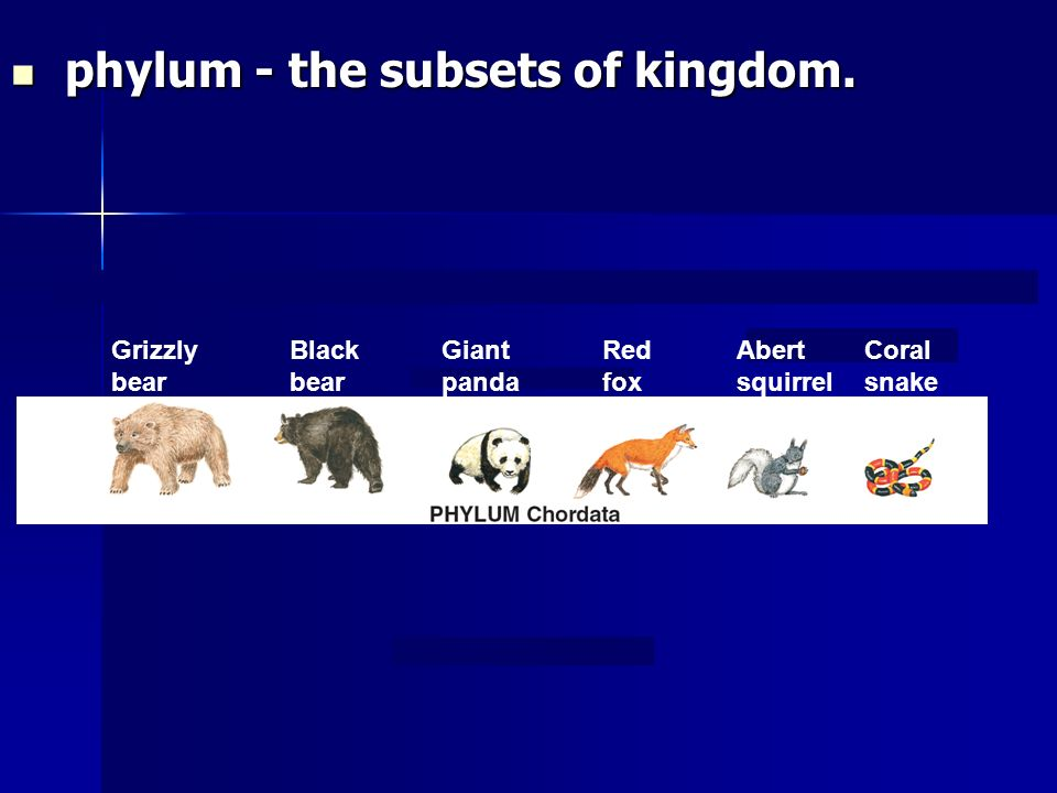 phylum - the subsets of kingdom.