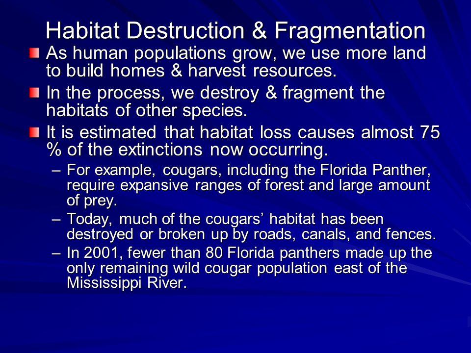 Habitat Destruction & Fragmentation