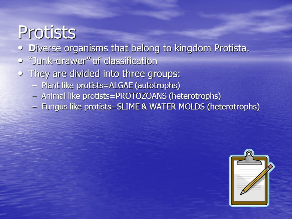 Protists Diverse organisms that belong to kingdom Protista.