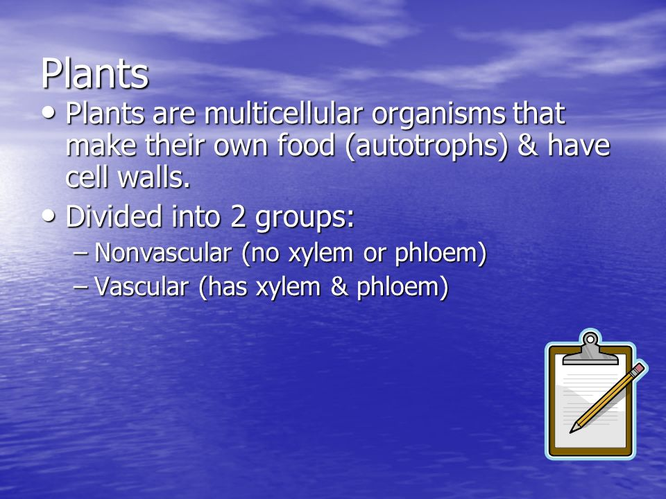 Plants Plants are multicellular organisms that make their own food (autotrophs) & have cell walls. Divided into 2 groups: