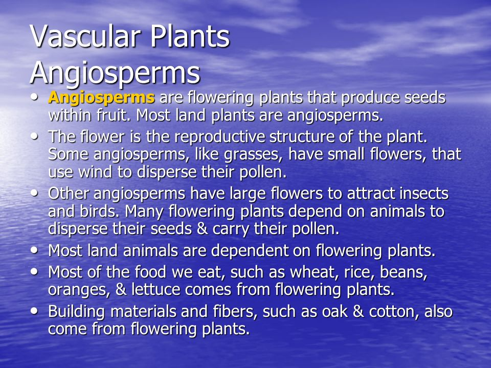 Vascular Plants Angiosperms