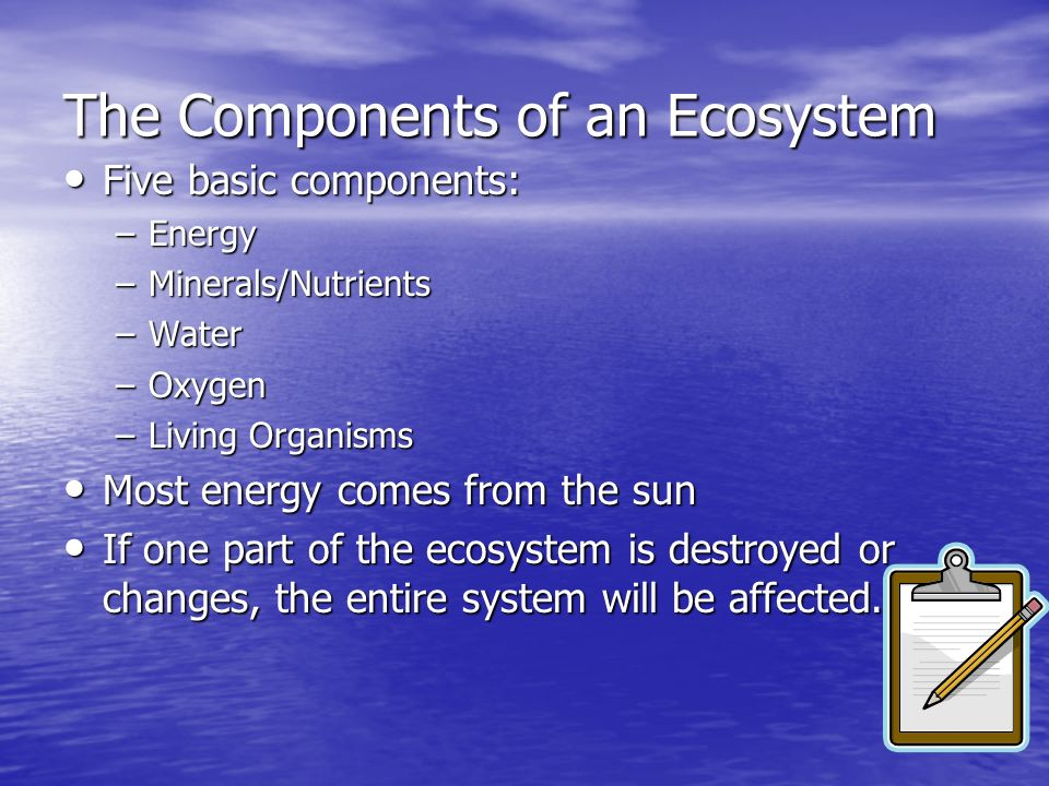 The Components of an Ecosystem
