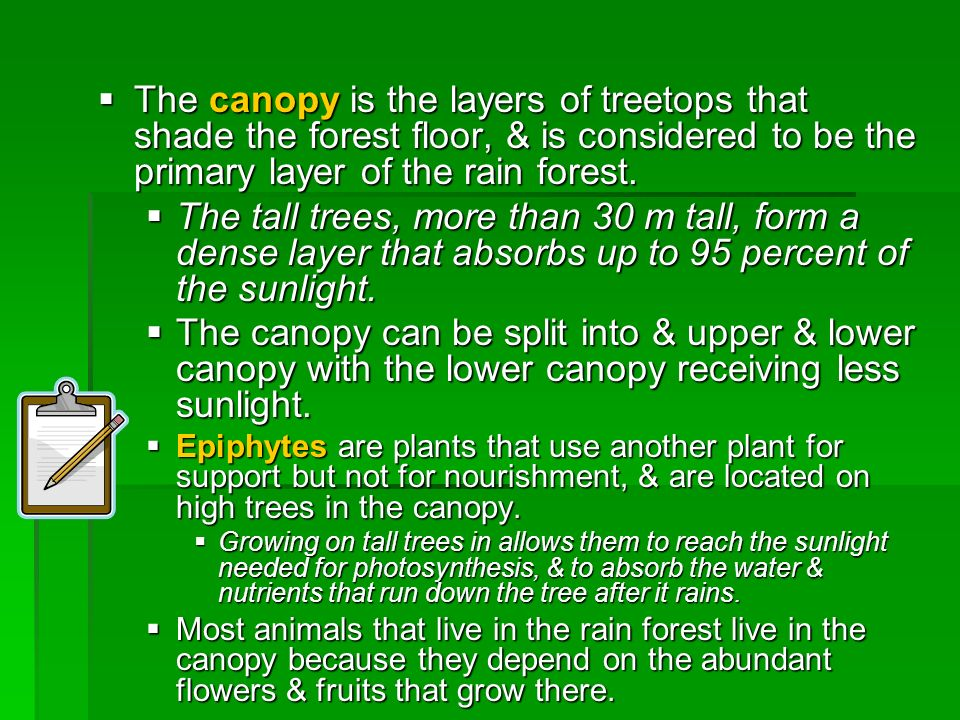 The canopy is the layers of treetops that shade the forest floor, & is considered to be the primary layer of the rain forest.