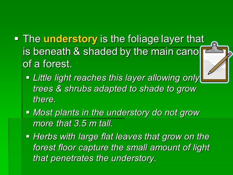 The understory is the foliage layer that is beneath & shaded by the main canopy of a forest.