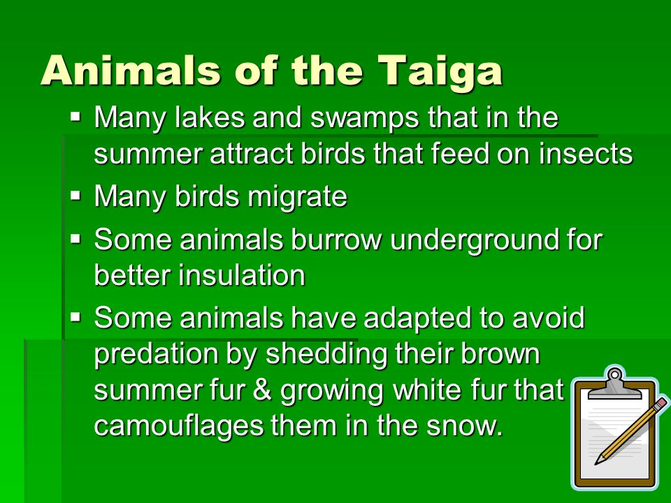 Animals of the Taiga Many lakes and swamps that in the summer attract birds that feed on insects. Many birds migrate.
