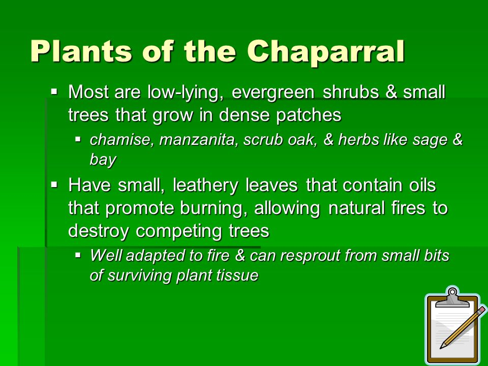 Plants of the Chaparral
