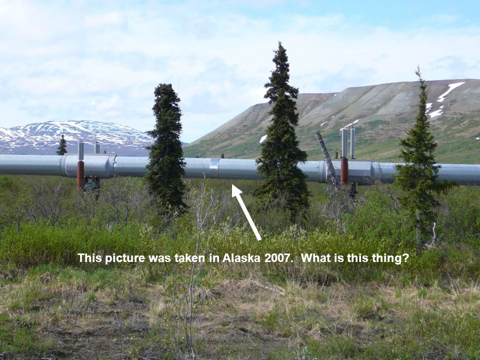 This picture was taken in Alaska 2007. What is this thing