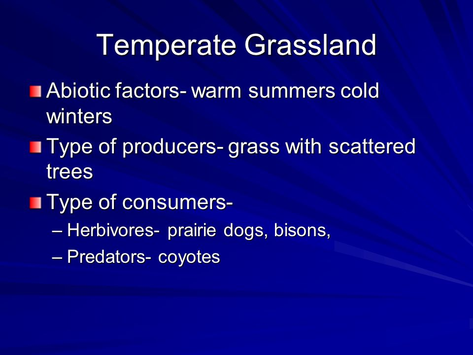 Temperate Grassland Abiotic factors- warm summers cold winters