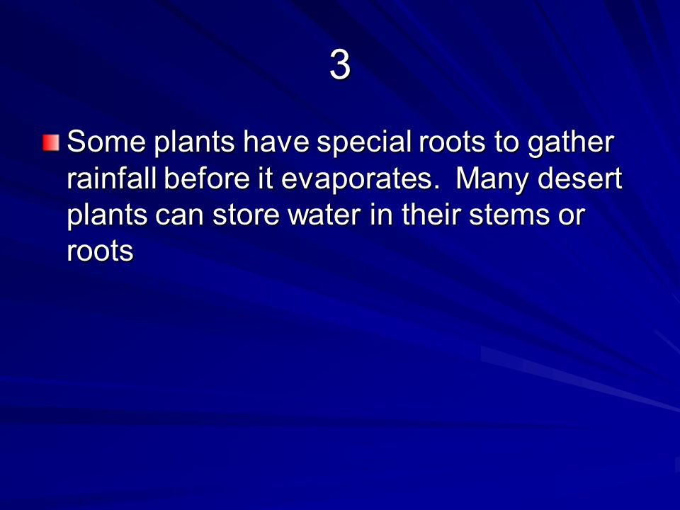 3 Some plants have special roots to gather rainfall before it evaporates.