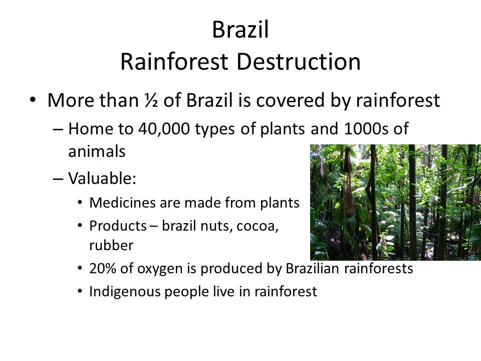 Brazil Rainforest Destruction