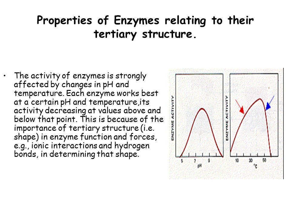 enzymes and their importance Sources of enzymes  producers of industrial enzymes and their customers will share the common aims of economy, effectiveness and safety.