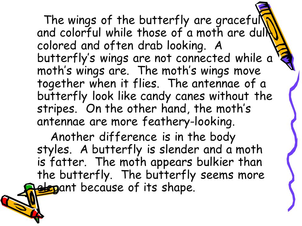 The wings of the butterfly are graceful and colorful while those of a moth are dull-colored and often drab looking. A butterfly's wings are not connected while a moth's wings are. The moth's wings move together when it flies. The antennae of a butterfly look like candy canes without the stripes. On the other hand, the moth's antennae are more feathery-looking.